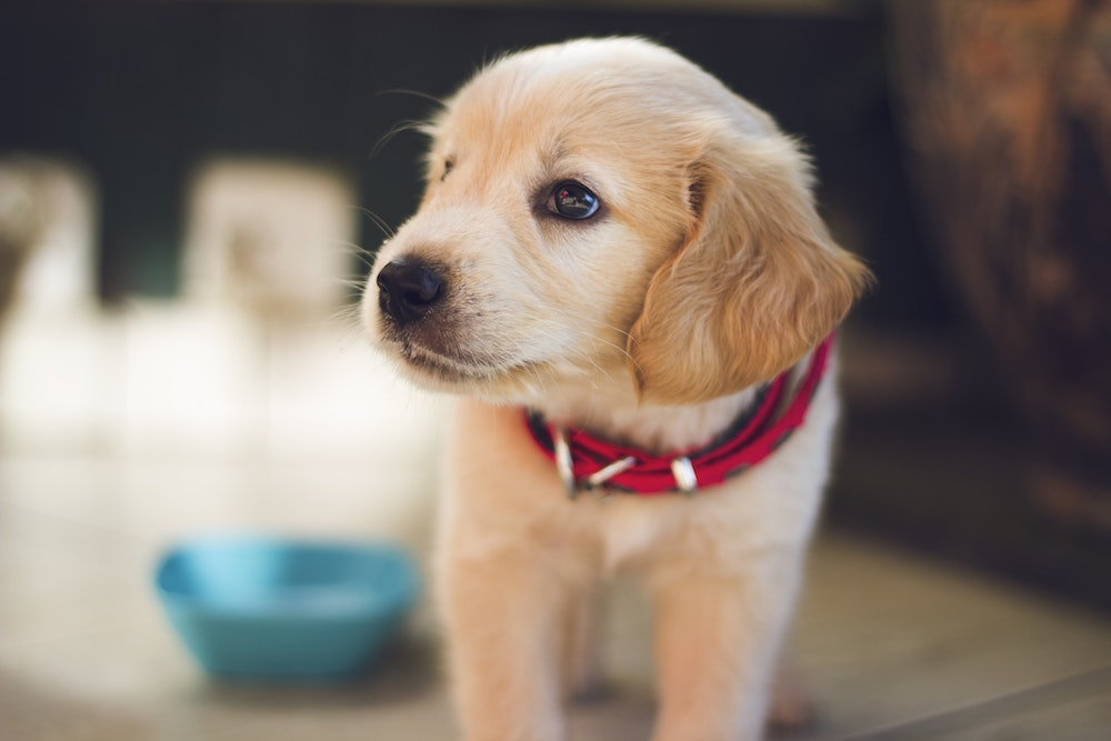 pet health insurance Montgomery TX